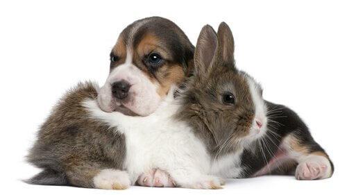 Convivência entre cães e coelhos: conselhos