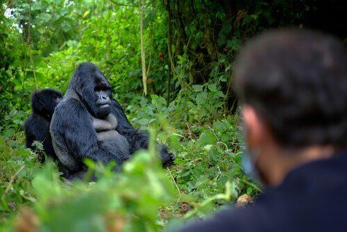 6 guardas assassinados por proteger os gorilas