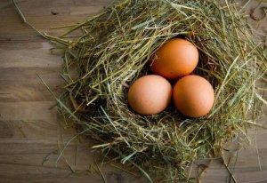 qualidade dos ovos de galinha