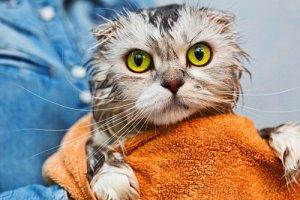 gato tomou banho