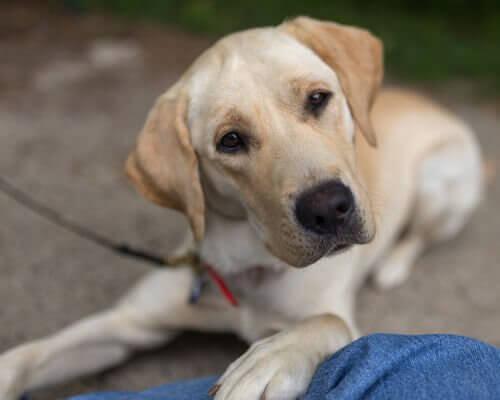 Cachorro de olhar terno