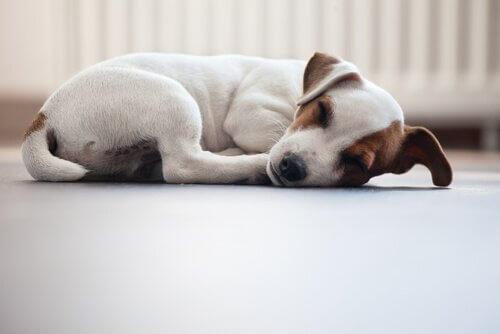 sedentarismo nos animais