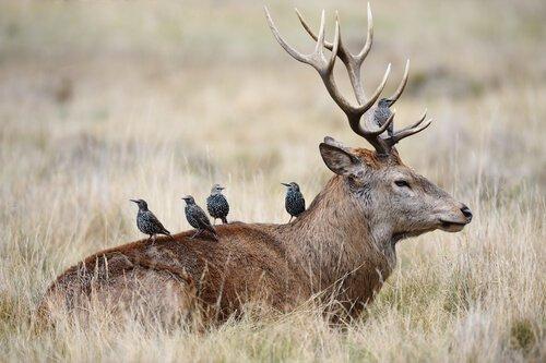 A simbiose em animais