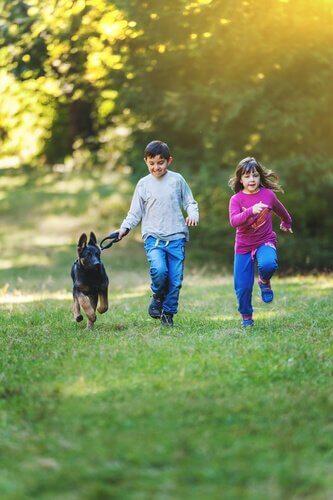 pastor alemão correndo com crianças