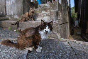 ilhas dos gatos