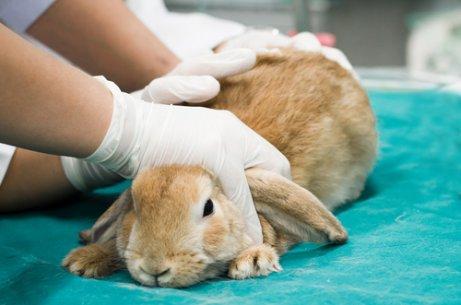 Vacinas para coelhos: cuide do seu animal