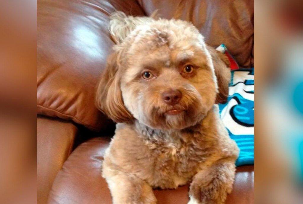 Conheça Yogi, um cãozinho com cara de gente