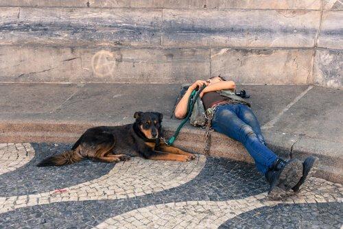 5 rotas maravilhosas para viajar pela Europa com o seu cão