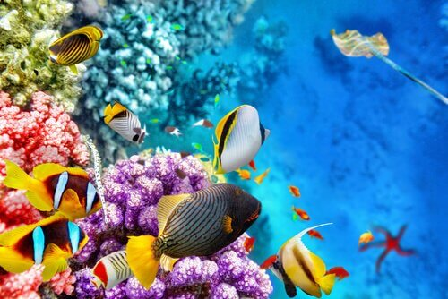 A fauna da Grande Barreira de Corais