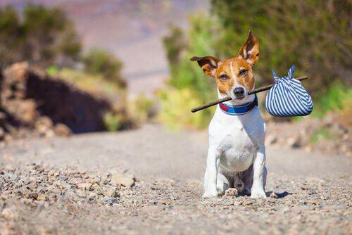 Cachorro com trouxinha na boca