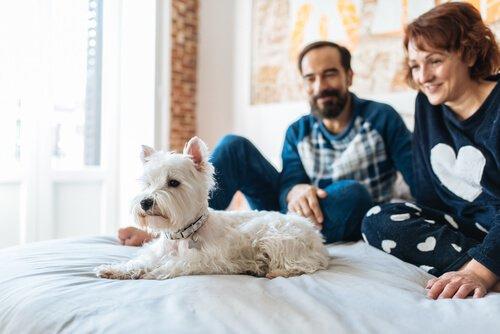 Prepare sua casa para ser um lar temporário