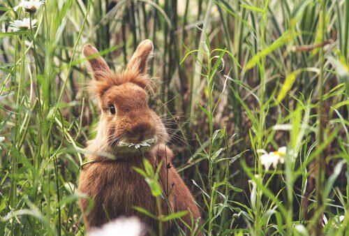 Orientações sobre a alimentação dos coelhos