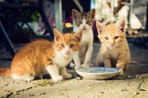 Como alimentar uma colônia de gatos corretamente?