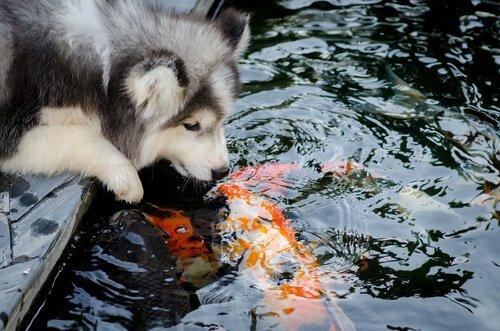 Amizade entre espécies animais