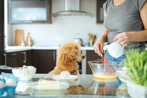 animais em sua cozinha