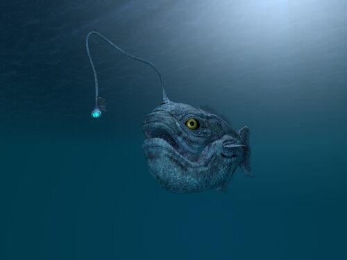 Animais que vivem no fundo do mar