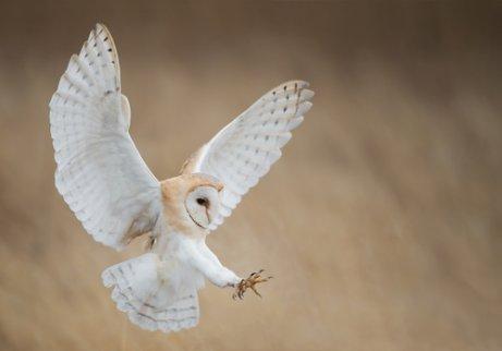 Aves de rapina diurnas e noturnas: saiba mais aqui!
