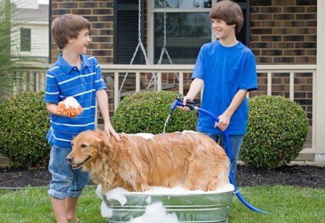 Dicas para dar banho no seu cão com mangueira