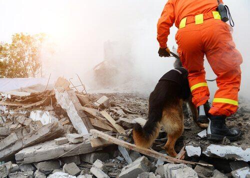 Cão de resgate