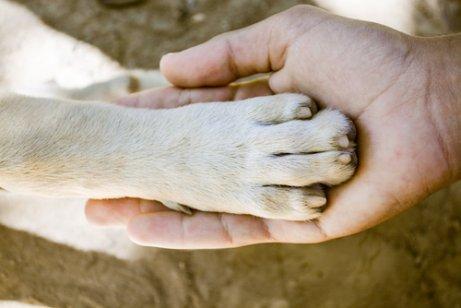 Quais são os cães com as patas mais fortes?