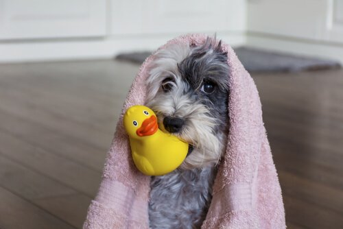 Banho em casa