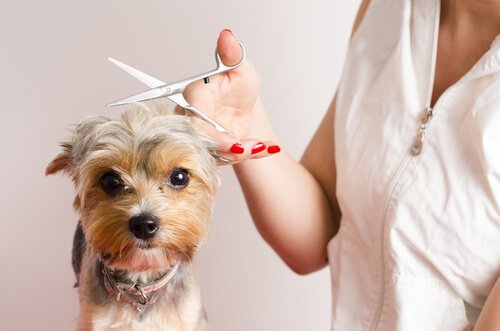 Seu cachorro odeia ir para a tosa? Confira estes conselhos