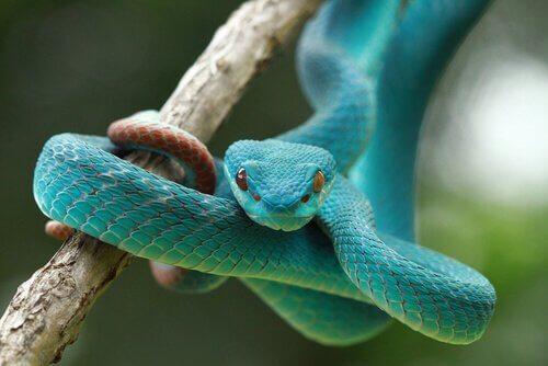 Tem uma serpente no jardim: o que eu faço?