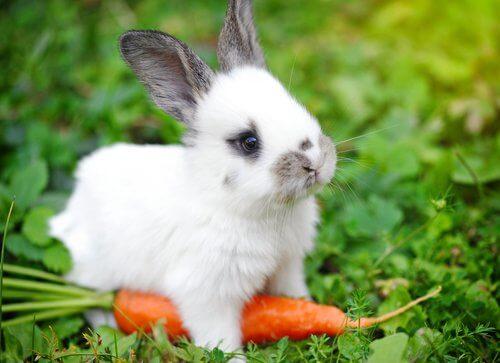 Os melhores alimentos para um coelho