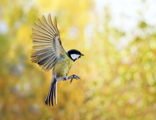 Como atrair pássaros para o seu jardim