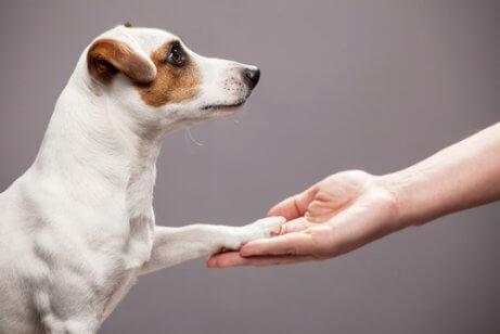 Cuidados com as patas de seu cão