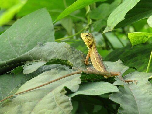 Diferenças entre lagartos e salamandras
