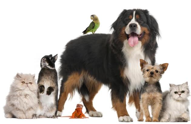 Você conhece os Direitos dos Animais? Confira-os aqui!