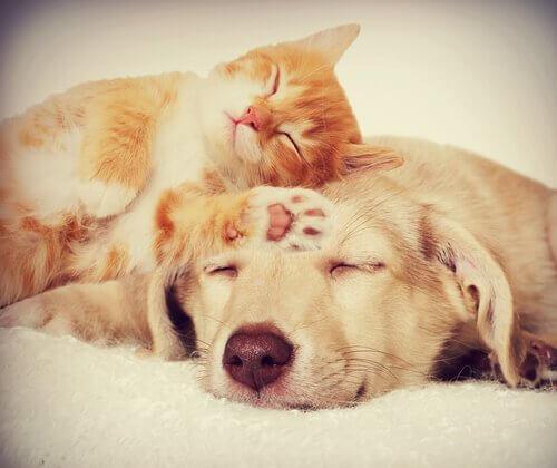 Como fazer cães e gatos se darem bem