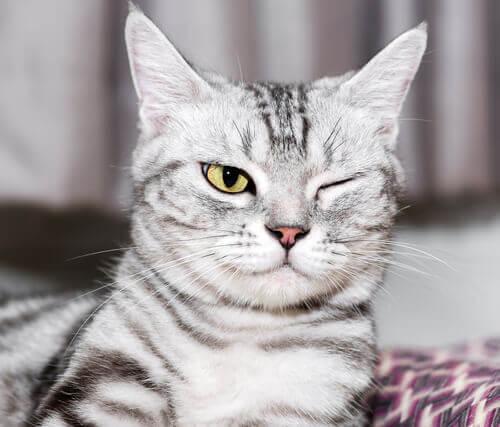 Doenças oculares nos gatos: prevenção e cuidado