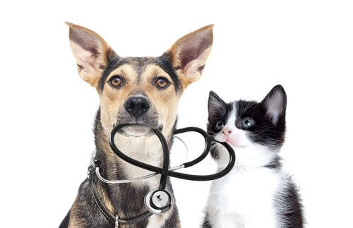 Exames médicos em animais