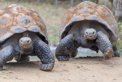 A fauna das ilhas Galápagos