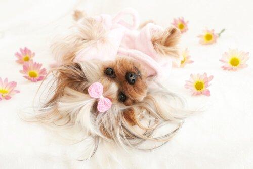 Cães e flores