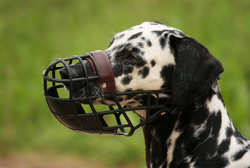 Focinheira para cães: o que saber
