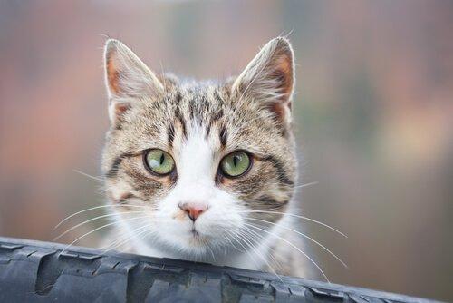Por que seu gato olha fixamente para você?