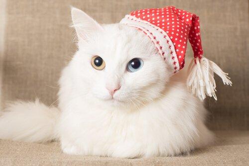 7 raças de gatos com pelagem abundante