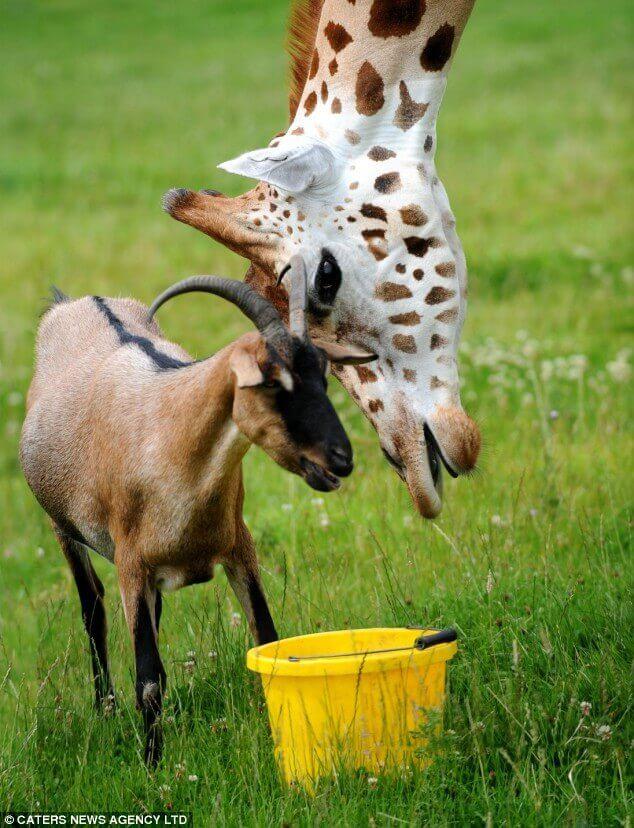Amizade entre espécies