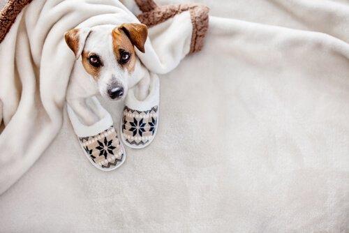 Cão com roupas