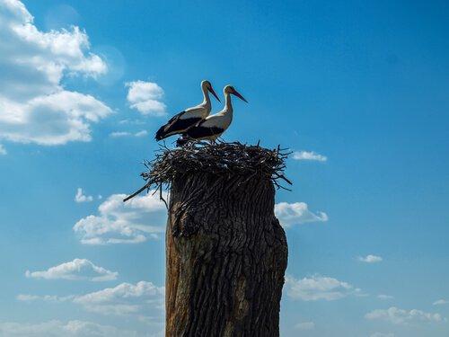 Klepetan e Malena, dois pássaros apaixonados
