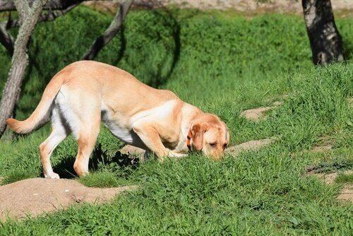 searching cães