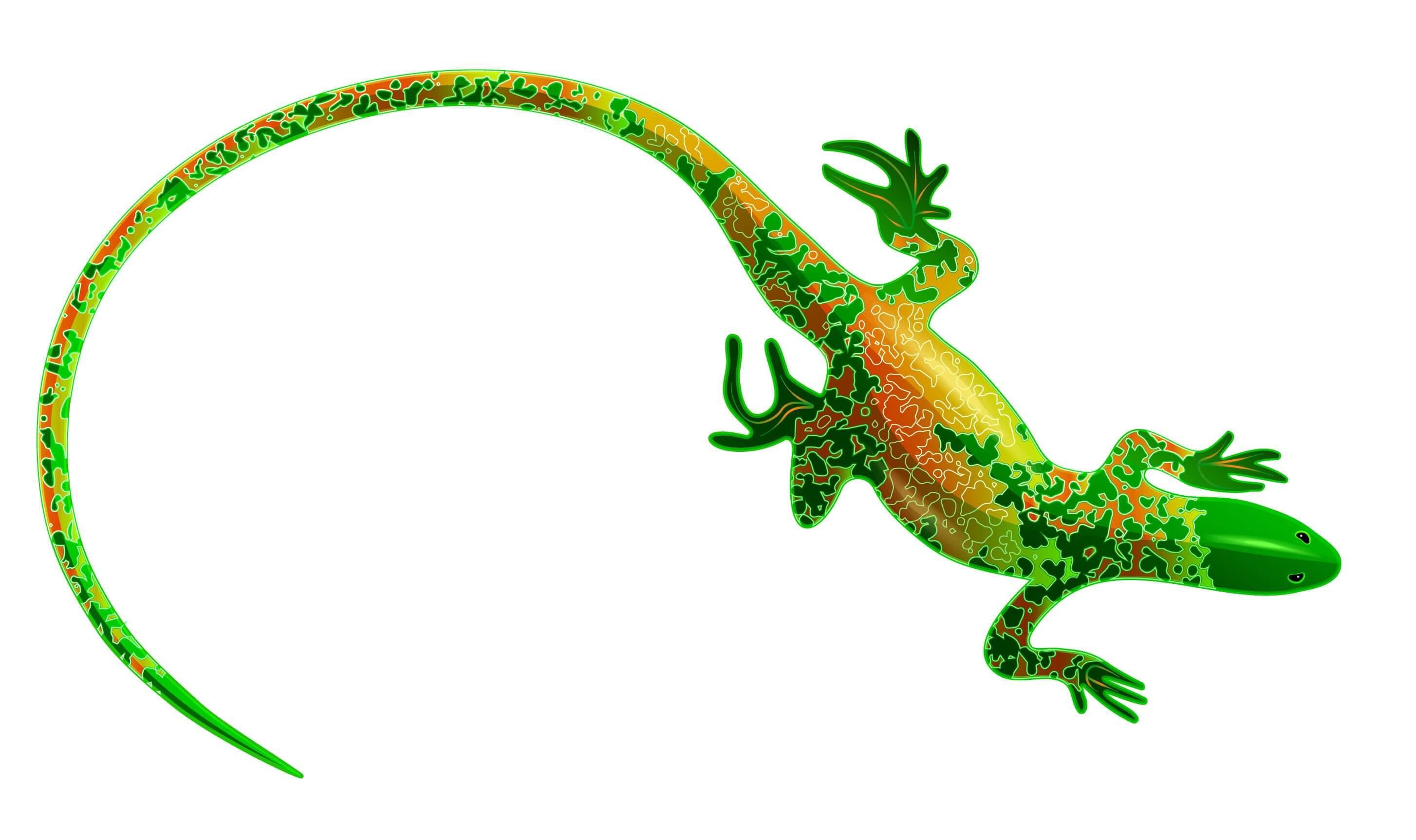 Lagartos e salamandras: semelhanças e diferenças