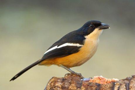 Turismo de observação de aves: 9 lugares lindos