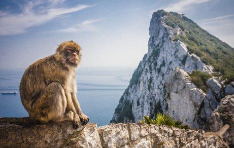 Macaco-de-Gibraltar: características, comportamento e habitat