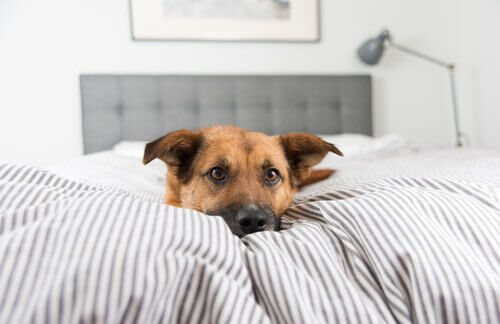 Por que meu cão não quer dormir em sua cama?