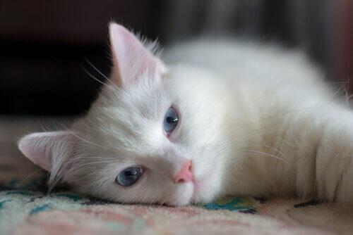 5 músicas dedicadas aos animais de estimação