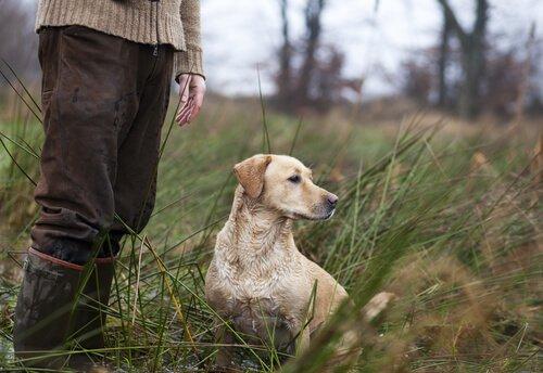 Nomes para cães de caça